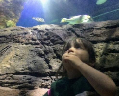 [Educación Infantil] ¡Visitamos Sea Life!